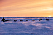 Aaron Burmeister runs on the slough in 30 mph wind leaving the Unalakleet checkpoint at sunset during Iditarod 2015