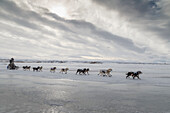 Ray Redington Jr. on the trail in 30 mph wind several miles before arriving at the Unalakleet checkpoint during Iditarod 2015