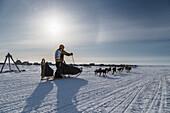 Alan Stevens on the trail a few miles from the finish line in Nome during Iditarod 2015