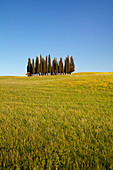 Group of cypress trees, near San Quirico, Val d'Orcia Orcia Valley, UNESCO World Heritage Site, Siena Province, Tuscany, Italy, Europe