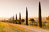 Alley of cypress trees at sunrise, near San Quirico, Val d'Orcia Orcia Valley, UNESCO World Heritage Site, Siena Province, Tuscany, Italy, Europe