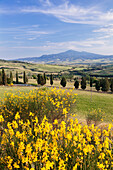 Tuscan landscape  with Monte Amiata, near Pienza, Val d'Orcia Orcia Valley, UNESCO World Heritage Site, Siena Province, Tuscany, Italy, Europe