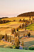 Road liend with cypresses, Monticchiello, Val d'Orcia Orcia Valley, UNESCO World Heritage Site, Siena Province, Tuscany, Italy, Europe