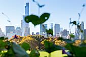 Autumn in Central Park, Sheep Meadow, Skyline, Manhattan, New York City, USA, America