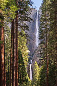 Yosemite Falls through the conifer woodlands of Yosemite Valley, UNESCO World Heritage Site, California, United States of America, North America