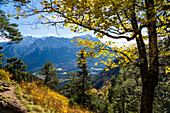 mountain forest, Mixed forest, fall, Kramer, Garmisch, Wetterstein mountains, Zugspitze, Garmisch, Upper Bavaria, Alps, Germany, Europe