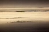 trees looking out of morning fog at Dalton Highway, Yukon-Koyukuk Census Area, Alaska, USA