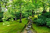 Okochi Sanso Villa garden, stone path through vibrant leafy trees with moss covered ground in summer, Arashiyama, Kyoto, Japan, Asia