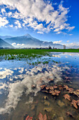 The natural reserve of Pian di Spagna flooded with Mount Legnone reflected in the water, Valtellina, Lombardy, Italy, Europe