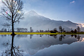 Natural reserve of Pian di Spagna  flooded with Mount Legnone and trees reflected in the water, Valtellina, Lombardy, Italy, Europe