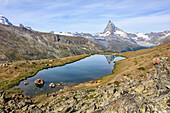 Hikers admire the Matterhorn reflected in Lake Stellisee, Zermatt, Canton of Valais, Pennine Alps, Swiss Alps, Switzerland, Europe