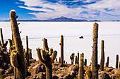 Cactus covered Fish Island Isla Incahuasi Inka Wasi, Uyuni Salt Flats Salar de Uyuni, Uyuni, Bolivia, South America