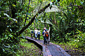 Amazon Jungle walkway at Sacha Lodge, Coca, Ecuador, South America