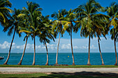 Palm tree line, Royal Island, Iles du Salut, Devils Island, French Guiana, Department of France, South America