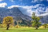 Maple in autumn colours with Spritzkarspitze in clouds, Grosser Ahornboden, Eng, Natural Park Karwendel, Alpenpark Karwendel, Karwendel, Tyrol, Austria