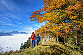 Two persons hiking with beech trees in autumn colours with fog in valley of Inn, Wendelstein in background, view from Heuberg, Heuberg, Chiemgau, Chiemgau Alps, Upper Bavaria, Bavaria, Germany