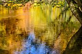 Herbstlich verfärbte Buchen spiegeln sich in Würm, Mühltal, Würmtal, Starnberg, Oberbayern, Bayern, Deutschland
