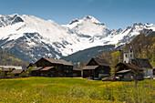 snow-capped mountains, flower meadow in spring, Bergdorf Elm, UNESCO World Heritage Site Swiss Tectonic Arena Sardona, Kanton Glarus, Switzerland