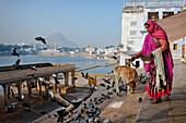 Woman feeding doves at lake Pushkarsee, Pushkar, Rajasthan, India