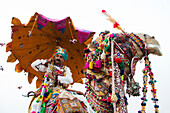 Indian male on a beautifully decorated camel, Desert Festival in Jaisalmer, Rajasthan, India