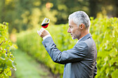Caucasian man examining glass of wine in vineyard