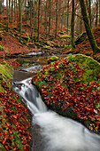 Autumn in the Karlstalschlucht, Palatinate Forest, Rhineland-Palatinate, Germany