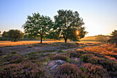 Wonderful sunrise over Mehlinger heath, Mehlingen, Kaiserslautern, Rhineland-Palatinate, Germany