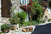 dog lying on a street in the village of oppede-le-vieux, regional nature park of the luberon, vaucluse (84), france