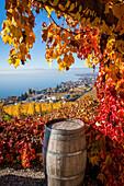 perspective sur les vignes de la region viticole du lavaux depuis le village de grandvaux avec le lac leman et lausanne en fond, au premier plan une vigne et un tonneau de vin, region inscrite sur la liste du patrimoine mondial de l'unesco depuis 2007, gr