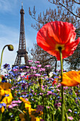 flowerbeds in spring, trocadero garden in front of the eiffel tower, 16th arrondissement, paris (75), france