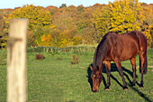 pasture and horse in a meadow in autumn colours, rugles (27), france