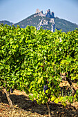 vineyards of the la riaille valley, the village of suzette and the dentelles de montmirail, vaucluse (84), paca, provence alpes cote d'azur, france