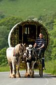 Horse drawn caravans heading towards the horse fair at Appleby in Westmorland Cumbria, England