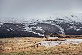 Hütte in der Nähe von den Geysiren in Südisland, morgens, Winter, Goldener Kreis, Berge, Island, Nordeuropa