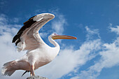Low angle view of bird under blue sky