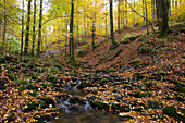 Fallen leaves in creek of Kaskadenschlucht canyon and trees with autumn foliage