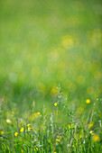 Wildflowers and grass, close-up