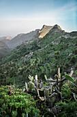 cactus in front of mountainous landscape around National Park Parque Nacional de Garajonay, La Gomera, Canary Islands, Spain