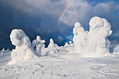 Snowy forest with strong frozen trees and dramatic clouds with a rainbow in the sunlight in winter, Riisitunturi National Park, Kuusamo, Lapland, Finland, Scandinavia