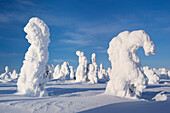 Snowy forest with strong frozen trees with a blue sky and sun light in winter, Riisitunturi National Park, Kuusamo, Lapland, Finland, Scandinavia