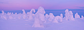 Panoramic view with snowy forest and strong frozen trees in pink dusk in winter, Riisitunturi National Park, Kuusamo, Lapland, Finland, Scandinavia