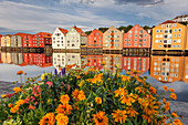 Colorful storage houses on the banks of the River Nidelva in the old town of Trondheim with blooming flowers in the summer, Trondheim, Sør-Trøndelag, Norway, Scandinavia