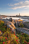 The lighthouse Tranøy Lighthouse on a sunny summer day with red berries in the foreground, Tranøya, Hamarøy, Nordland, Norway, Scandinavia