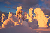 Snowy forest with strong frozen trees and dramatic clouds in the first sunlight in winter, Riisitunturi National Park, Kuusamo, Lapland, Finland, Scandinavia
