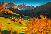 Funes Valley, Trentino Alto Adige, Italy. Santa Maddalena village surrounded by hills, with the odle on the background and a colorful trees on the foreground.