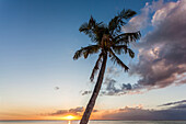 Sundown on the beach of Le Morne with look at the Indian Sea and a palm tree in the foreground, Mauritius, Africa