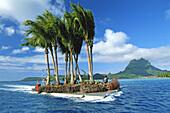 French Polynesia, Bora Bora, Man transporting palm trees on barge.