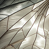 A White Silk Parachute looks like an insects wing as it is backlit by the sun.