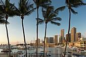 Tall Palm Trees Bayside Marketplace Marina Downtown Skyline Miami Florida Usa.