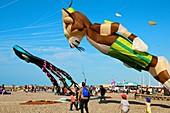 Flying Kites in the sky, autumn festival, beach, Dieppe, 76, Normandy, France.
